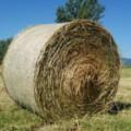 うさぎの牧草は通販でまとめ買い!おすすめされる理由とは