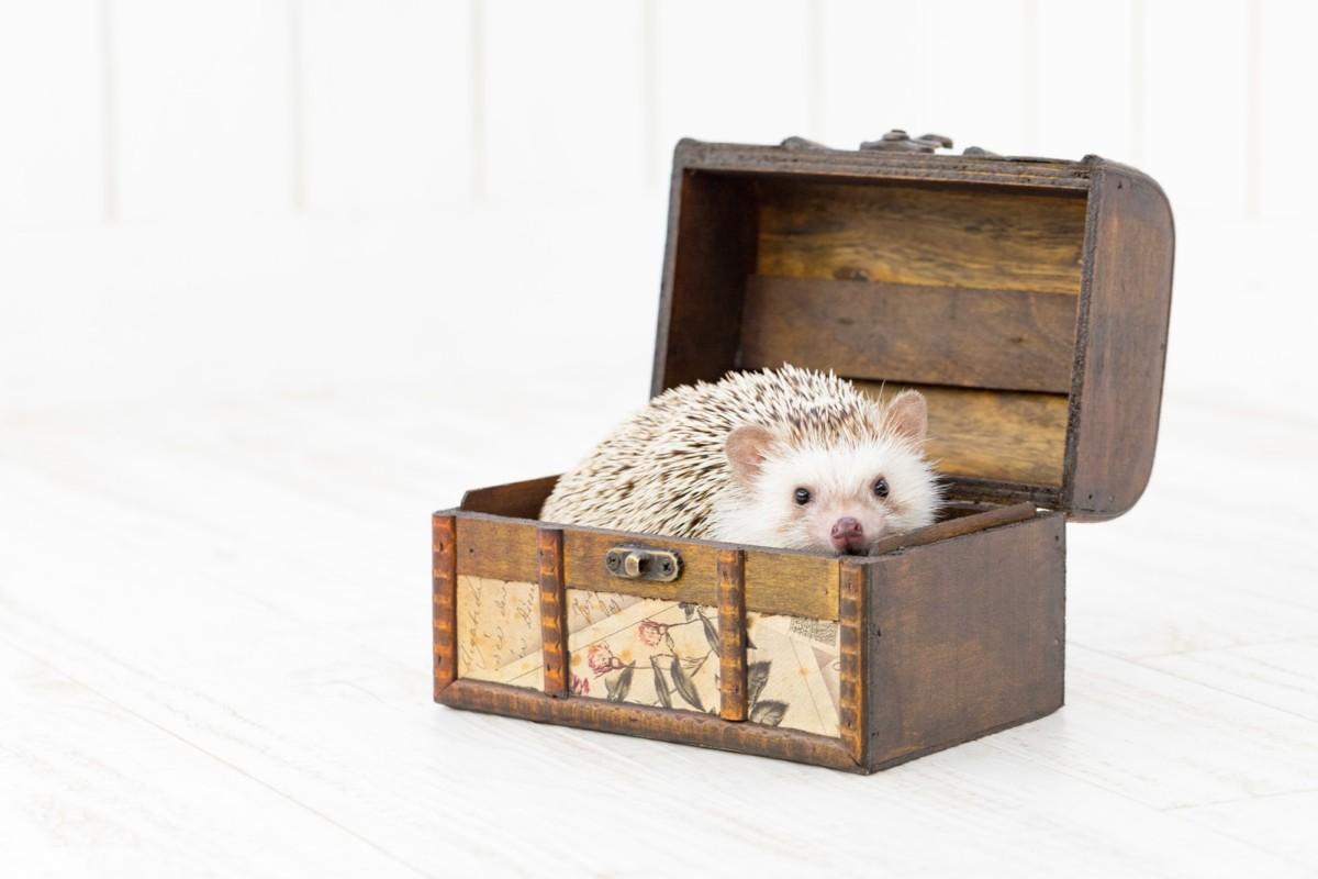 箱の中のハリネズミ