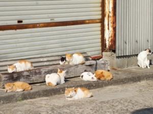 路傍に集まる猫たち