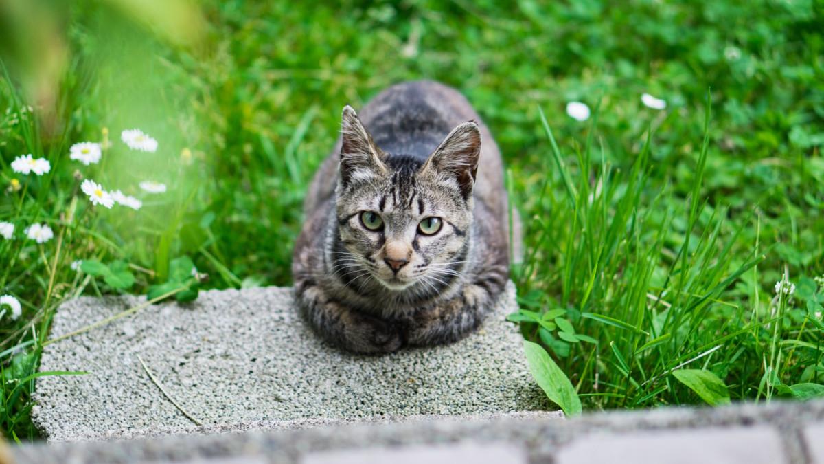 外に出る猫にはブロードライン