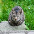 猫用ブロードラインは海外通販がお得です