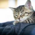 猫用レボリューションは海外通販がお得!