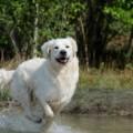 フィラリアが犬に引き起こす症状とは?