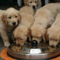 犬にも安全な食事を!おすすめのドッグフード5選