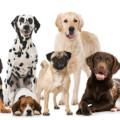 飼いやすい犬種って?これから犬を飼いたいとお考えの方必見!
